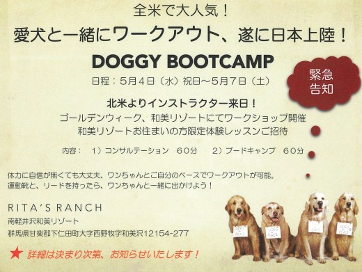 DOGGY BOOTCAMP2